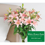 First Blush Lily Bouquet with Vase Plus $50 Gift Card - Standard Shipping Included
