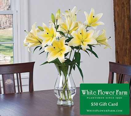 Stars Of Summer Lily Bouquet White Flower Farm