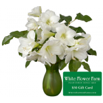 White Amaryllis in Green Vase Plus $50 Gift Card - Standard Shipping Included