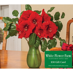 Red Amaryllis Bouquet with Vase Plus $50 Gift Card -Standard Shipping Included