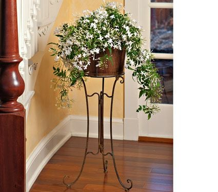 Jasmine in Filigree Plant Stand