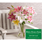 Perfumed Garden Lily Bouquet with Vase  Plus $50 Gift Card - Standard Shipping Included