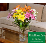 Vibrant Asiatic Lily Bouquet with Vase Plus $50 Gift Card - Standard Shipping Included