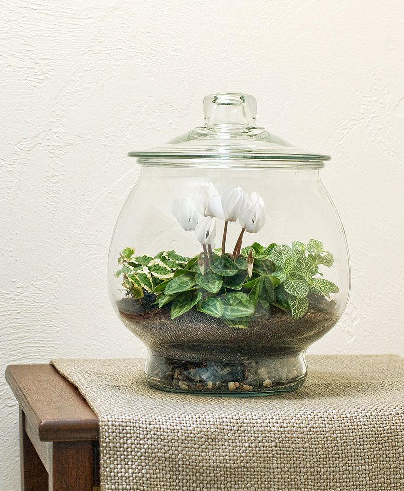 Angel Wings Terrarium Kit