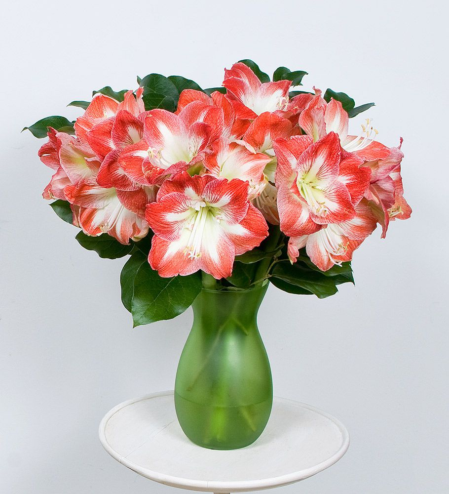 Fresh Pink Rose Flowers Bicolor Amaryllis Bouq...