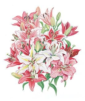 Flower Names In English French And Latin Name With Meaning The Language Of Flowers