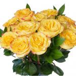 September - Yellow Bicolor Roses