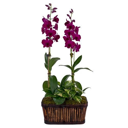 Months of Specialty Orchids - Grower's Choice