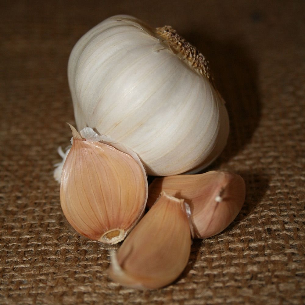 Garlic Silver Rose - 1-lb.