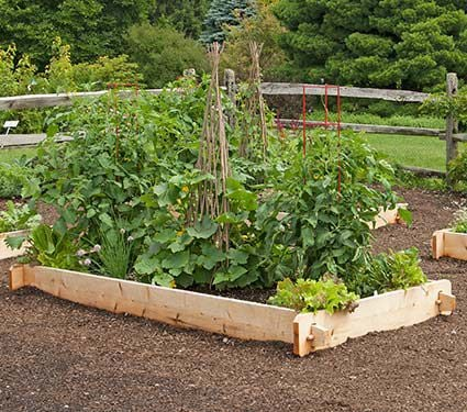 White Cedar Raised Beds
