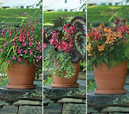 Preplanted Colorful Annual Collection Series for Part Shade, May - July