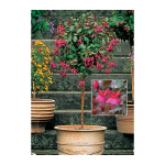 Fuchsia Display Topiary