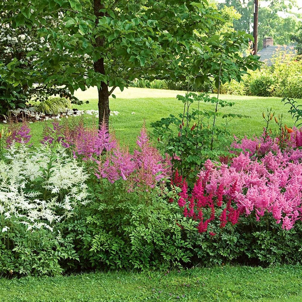 Cornerstone astilbe collection white flower farm for Flowering landscape plants