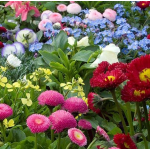 Saturday, April 8 What's New in Plants for 2017?