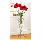 Amaryllis Benfica®, one bulb in a whale tail stand, river pebbles