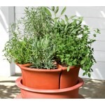 Herbes de Provence with Herb Bowl