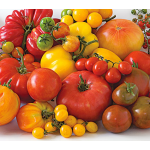 <strong>Friday, Saturday, Sunday, May 19–21 - 9:00 a.m. - 5:00 p.m.</strong> The 12th Annual Great Tomato Celebration