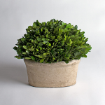 Preserved Boxwood Tabletop Planter