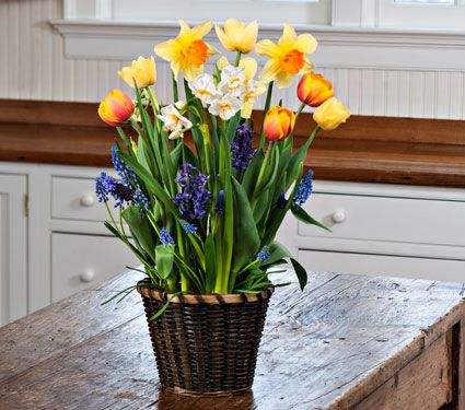 Breath of Spring Bulb Collection, 21 bulbs in small woven basket