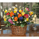 Round of Applause Bulb Collection, 67 bulbs in large woven vine basket