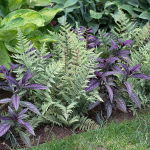 Purple Harmony Annual & Perennial Collection