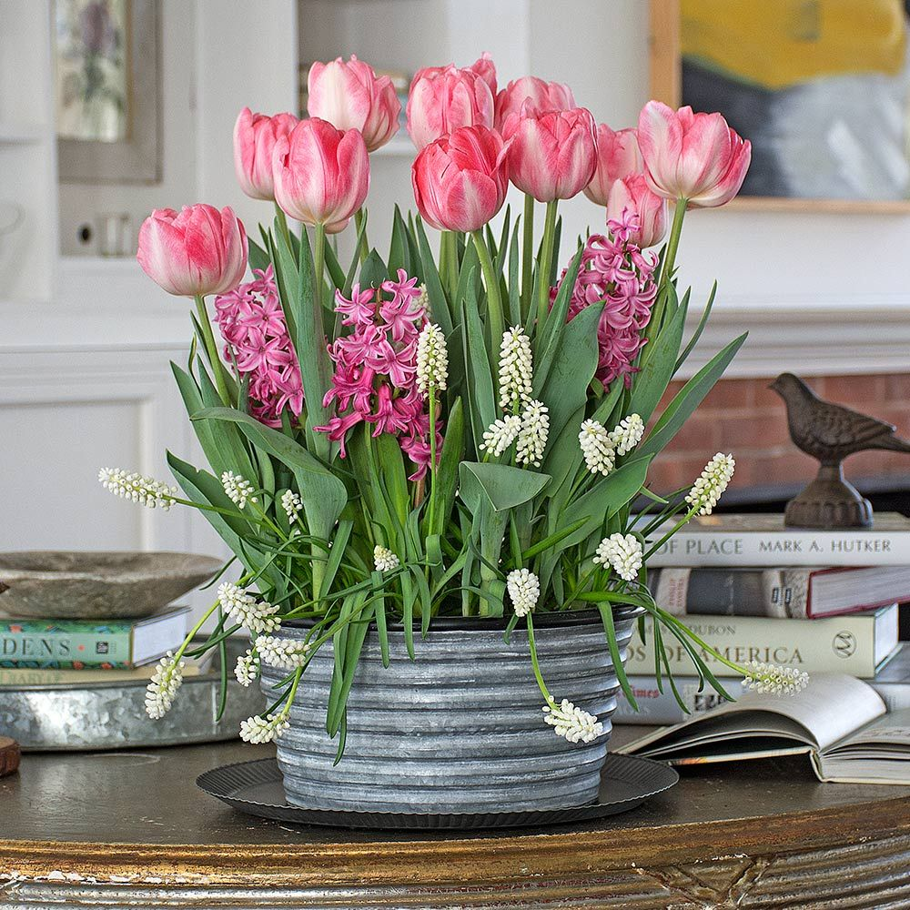 Pink Chiffon Bulb Collection, 30 bulbs in large metal cachepot