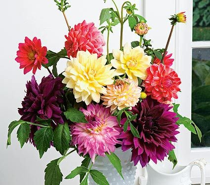 Annuals for Cutting