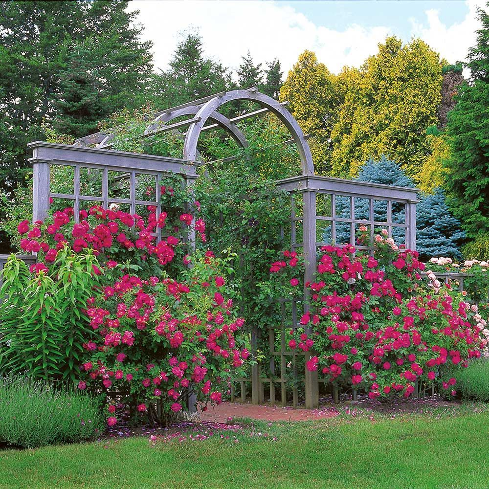 Arbors And Trellises Ideas