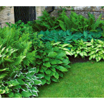 Preplanned Gardens For Shade
