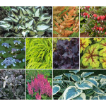Classic Preplanned Perennial Gardens