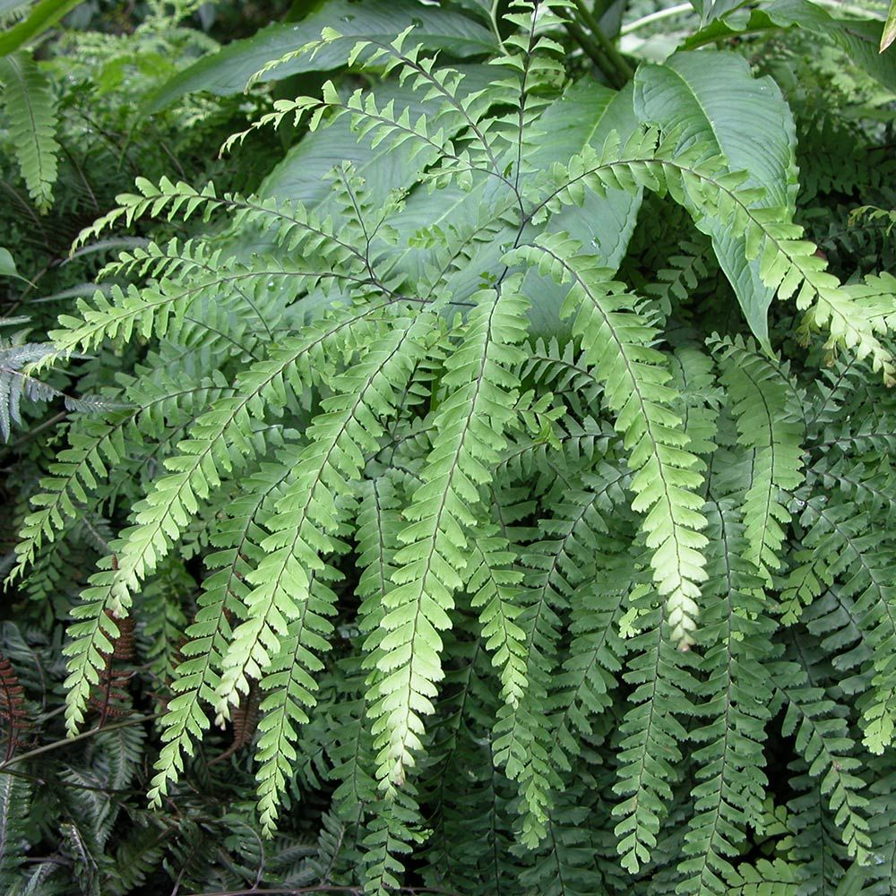 Image Result For Grey Fern Shower Curtain