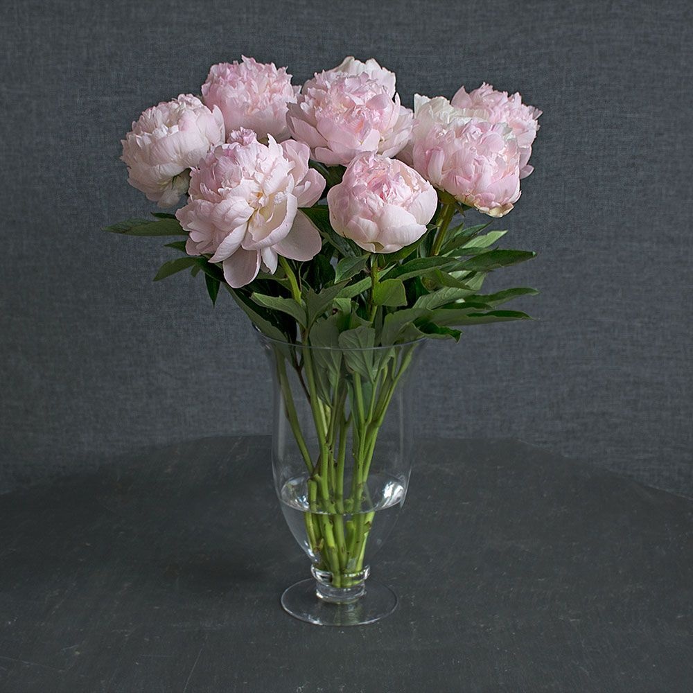 Blush Pink Peony Bouquet White Flower Farm