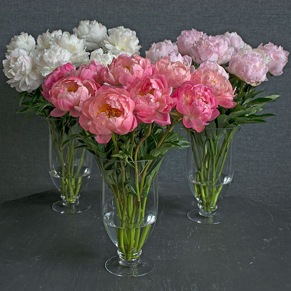 Weeks of Exquisite Peony Bouquets - Grower's Choice