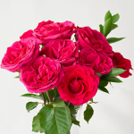 Hot Pink Rose Bouquet - 12 stems