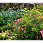 All Preplanned Gardens & Plant Collections