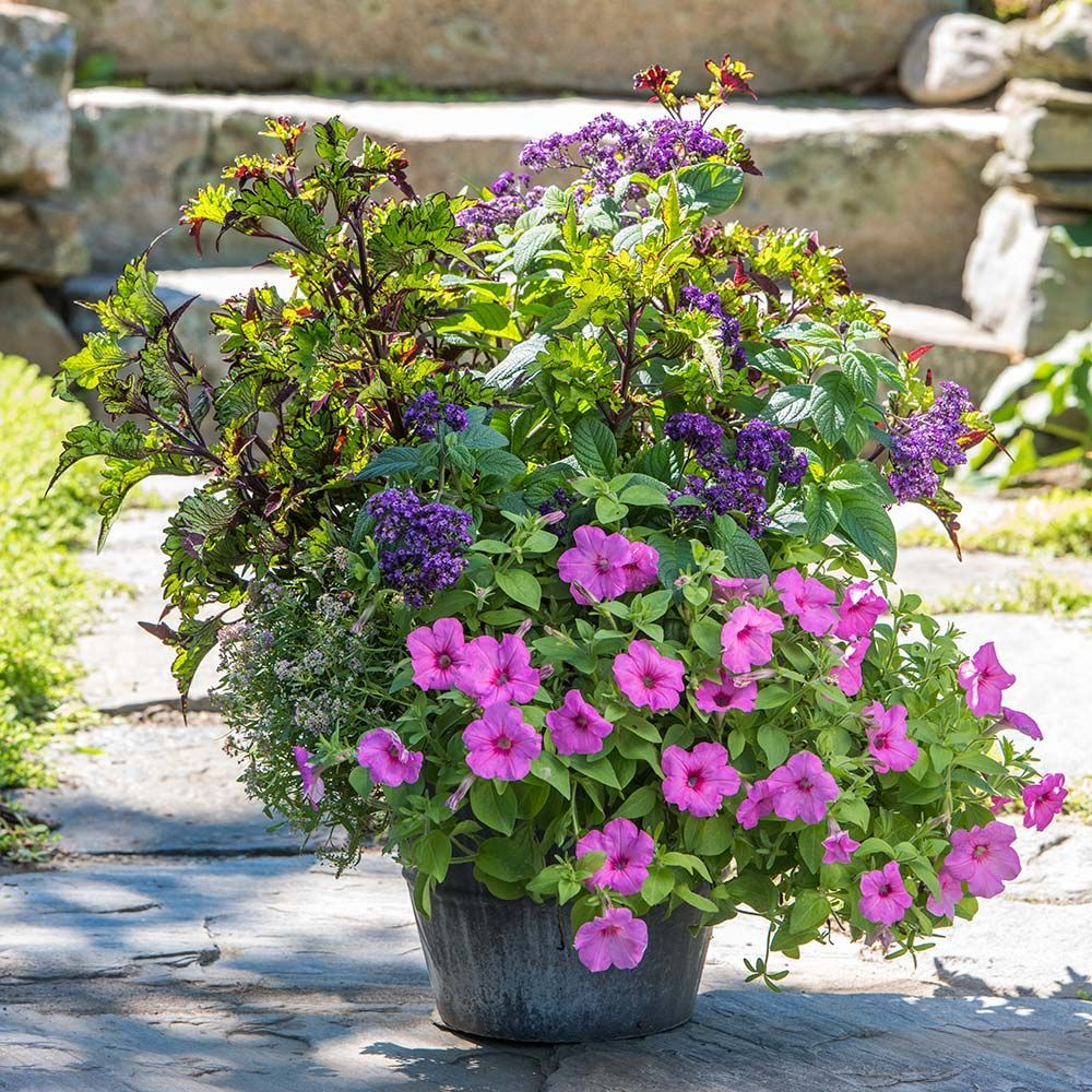 Exclusive Plant Collections