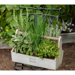 Chef's Companion Herb Collection