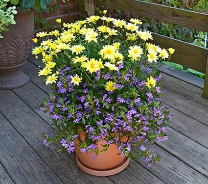 Annual Collections for Container Planting