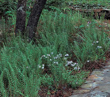North American Native Plants