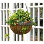 Strawberry Mara des Bois, Hanging Basket Kit
