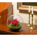 Holiday Ball Terrarium Kit