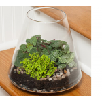 New World Terrarium Kit