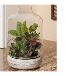 Message in a Bottle Terrarium Kit