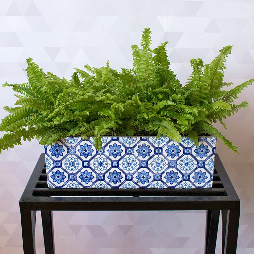 Compact Boston Fern in ceramic planter