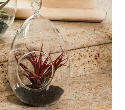Oval Air Plant Terrarium Kit