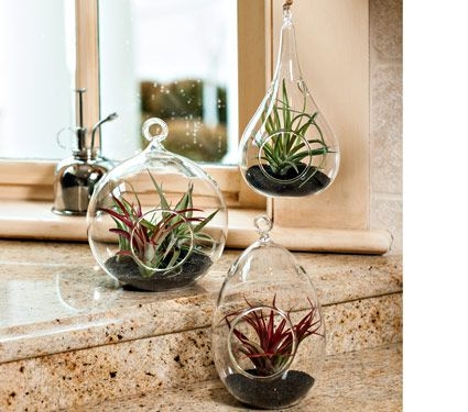 Air Plant Terrarium Trio