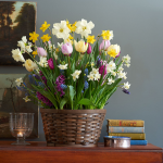 Three Princes Bulb Collection, 57 bulbs in large woven basket