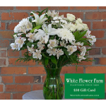 Star Light Bouquet with Vase Plus $50 Gift Card - Standard Shipping Included