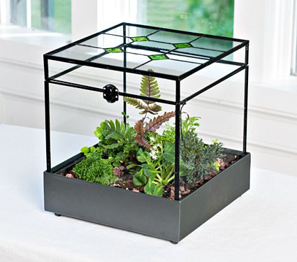 Stained Glass Terrarium Kit