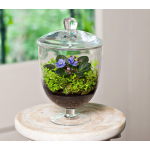 Old-World Charm Terrarium Kit